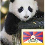Vi kan også godt li' pandaer! Men vi er imod det politiske spil de indgår i.